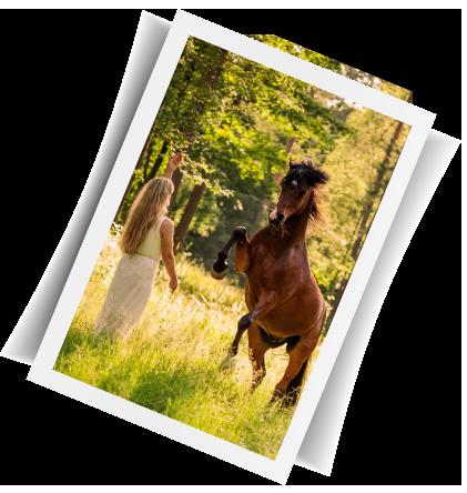 courin_horsemanship_titelbild2